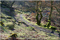 SK2579 : Path down into Padley Gorge by Roger Temple