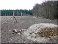 SY8695 : Hazel Planting by Nigel Mykura
