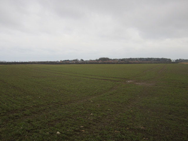Arable field west of Scremerston