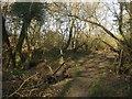 TQ1714 : Footbridge, Felbridge Rough by Simon Carey