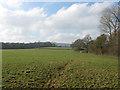 TQ1614 : Three Cornered Field by Simon Carey