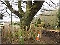 SX8770 : Tree by St Marychurch Road by Derek Harper