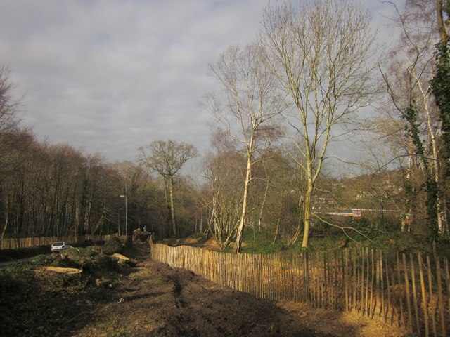 Tree clearance, St Marychurch Road