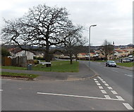 ST3091 : Oak tree at the corner of Russell Drive and Rutherford Hill, Malpas, Newport by Jaggery