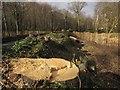 SX8770 : Tree clearance, St Marychurch Road by Derek Harper