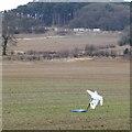 SK5149 : Scarecrow near Silo Farm by David Lally