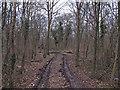 TQ6888 : Track into Hoppit Shaw, Langdon Nature Reserve by Roger Jones