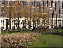 TQ4179 : Stagnant pond by Stephen Craven