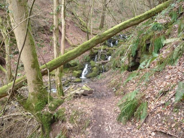 Path below Cleddon Shoots above the Wye Valley near Llandogo