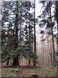 J3532 : Woodland above the Shimna at Tollymore Forest Park by Eric Jones