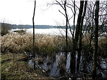 H5776 : Swampy area, Loughmacrory Lough by Kenneth  Allen