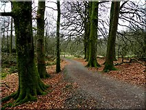 H5776 : Fallen leaves at Loughmacrory by Kenneth  Allen