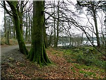 H5776 : Moss covered trees, Loughmacrory by Kenneth  Allen