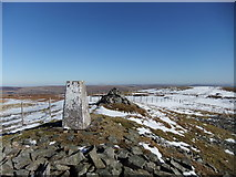 NY8235 : Trig pillar on Great Stony Hill by David Brown