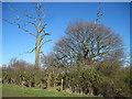 TA1551 : Footpath  Junction  in  a  field  corner by Martin Dawes