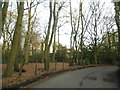 SU9891 : Welders Lane going through Grove Wood by David Howard