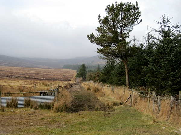 Fire Break and Forest