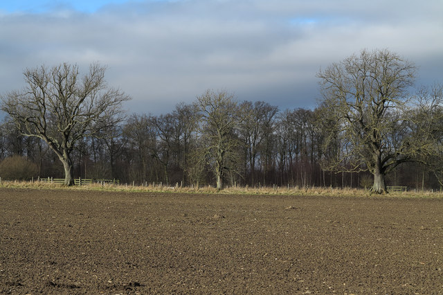 Trees beyond sown field