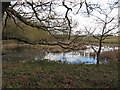 TQ6887 : Pond in Willow Park, Langdon Nature Reserve by Roger Jones