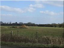 SJ6298 : Farmland near Little Byrom Hall Farm by JThomas