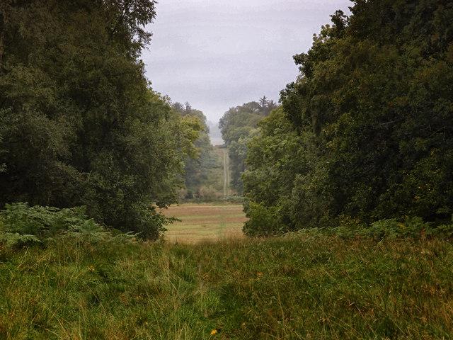 View from Bedwyn Brail