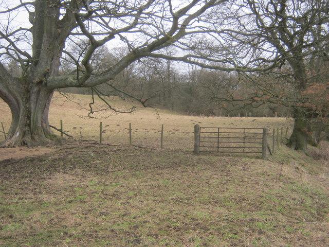 Field gate on line of Bedburn Public Footpath No 22