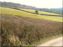 SX8979 : Fields above Higher Dunscombe by Derek Harper