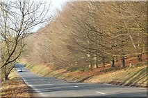 SO7641 : Jubilee Drive and the memorial trees, The Malverns by Bob Embleton