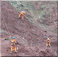 SX9574 : Roped workmen with spades mend cliff above railway, Teignmouth by David Hawgood