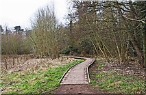 SO8475 : Boardwalk in Spennells Valley Nature Reserve, Spennells, Kidderminster by P L Chadwick