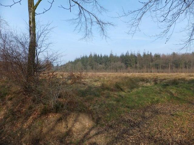 Open space in Downlands Plantation