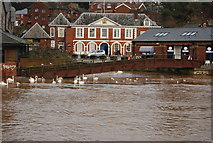SX9192 : View across the River Exe by N Chadwick
