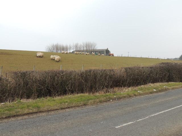 Farmland near Morriston
