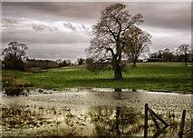 SU2763 : Tree in flooded field by Gillie Rhodes