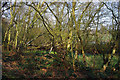 SP0584 : The wooded margin of Edgbaston Pool by Phil Champion