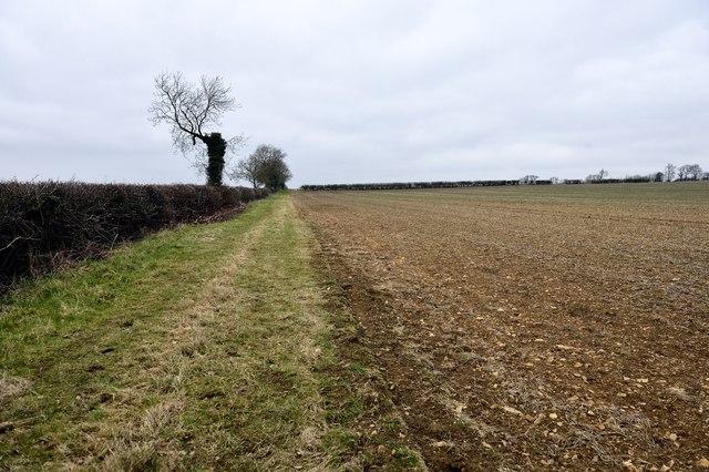 Field edge east of Charlton
