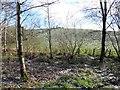 H4167 : Frosty fields, Drudgeon by Kenneth  Allen