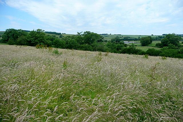 Meadow near Parwich Lees