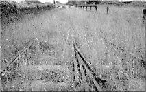 S7127 : Overgrown railway, New Ross (1999-1) by Albert Bridge