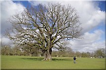 TL6804 : Great Oak and Highlands Park by Glyn Baker