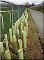 SX8771 : Tree guards by Newton Abbot Racecourse by Derek Harper