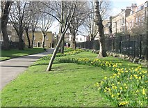 TQ3581 : Stepney Green Gardens. East London by Derek Voller