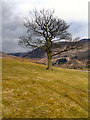 SE0103 : Tree above Dove Stone Reservoir by David Dixon