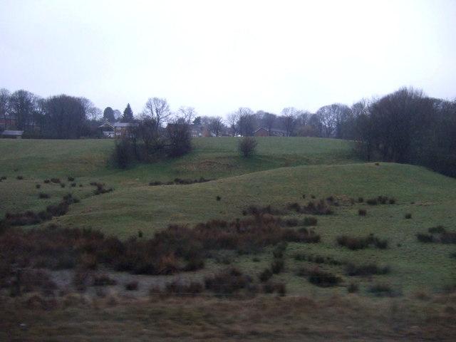 Grazing, Atkinson's Farm