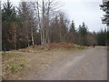 NM9631 : Path and road junction, Fearnoch Forest by Karl and Ali