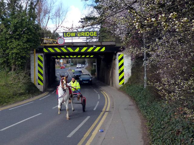 Horse Under The Bridge