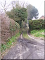 TM4468 : Love Lane, Westleton by Adrian Cable