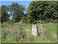 TF7926 : Trig point beside Church Lane, Harpley by Trevor Littlewood