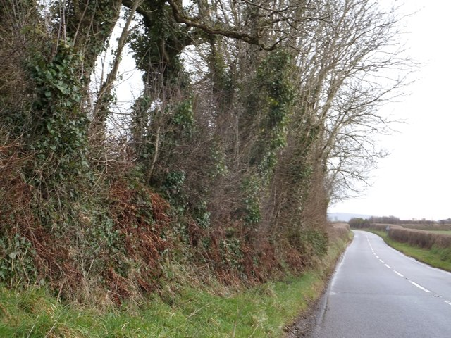 Contrasting hedges on the B3254