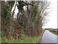SX2877 : Contrasting hedges on the B3254 by David Smith